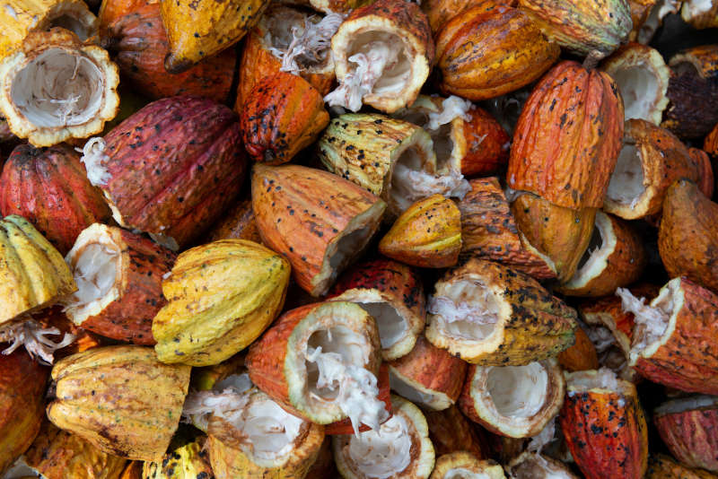 cocoa sustainable beauty brand