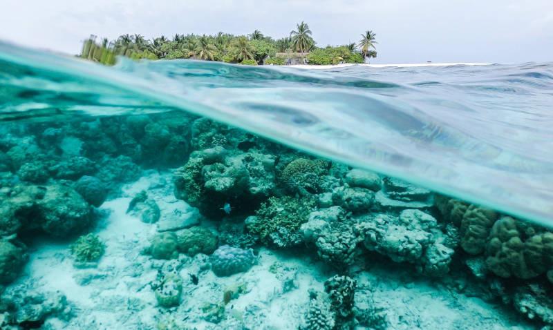 endangered coral reef