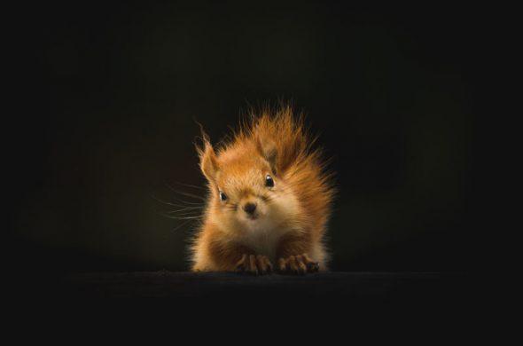 wildlife squirrel