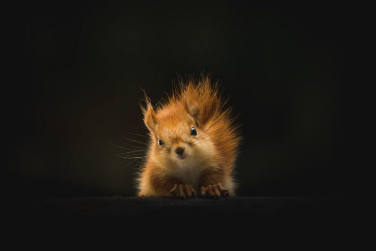 wildlife squirrel