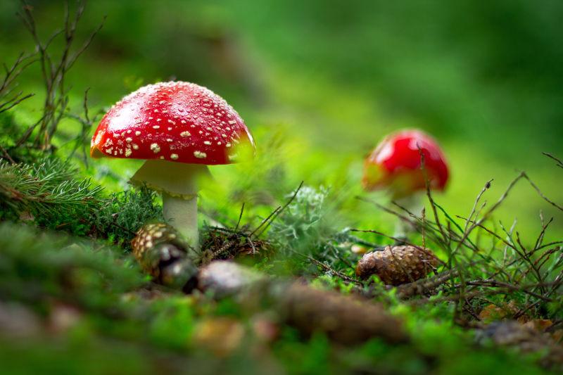 mushroom in garden