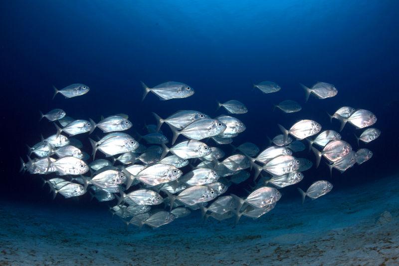 save the ocean fish