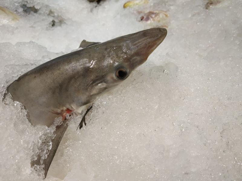 save the oceans shark