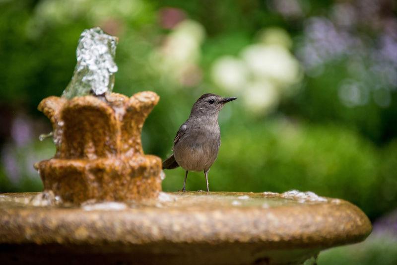 wildlife bird bath