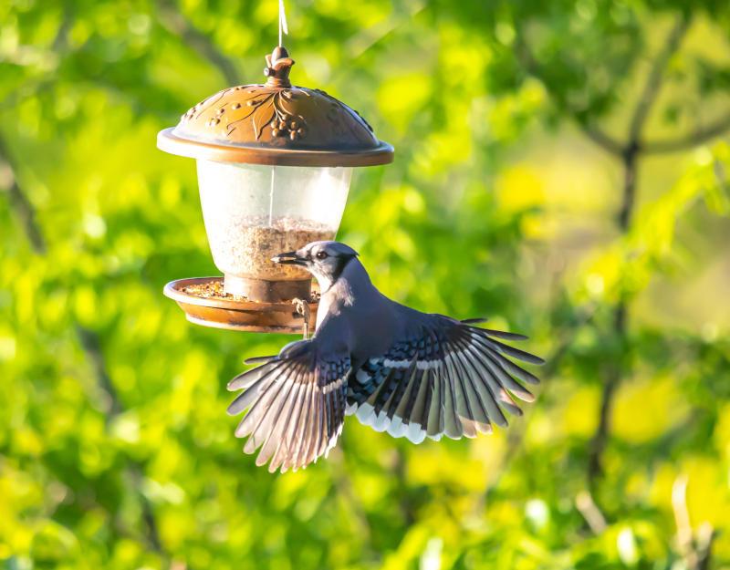 wildlife dove in eco garden