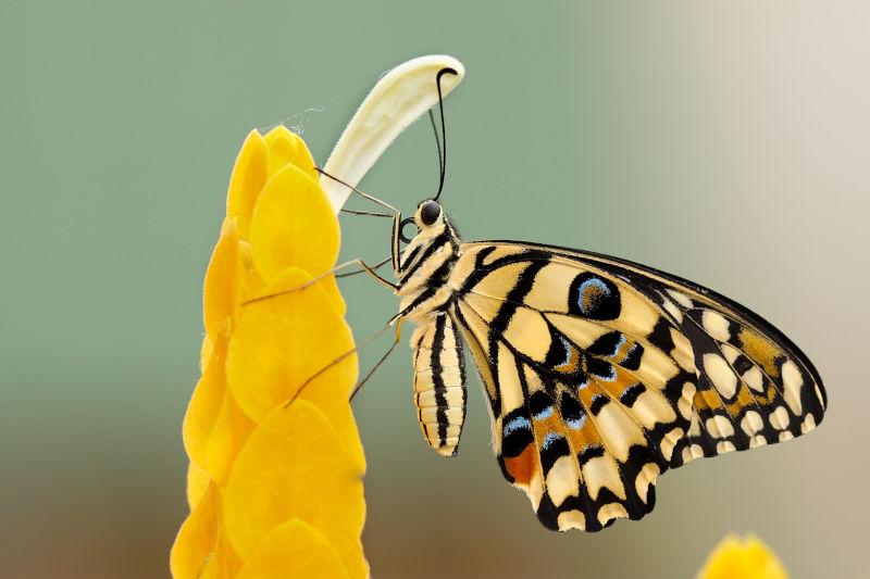 butterfly in wildlife garden