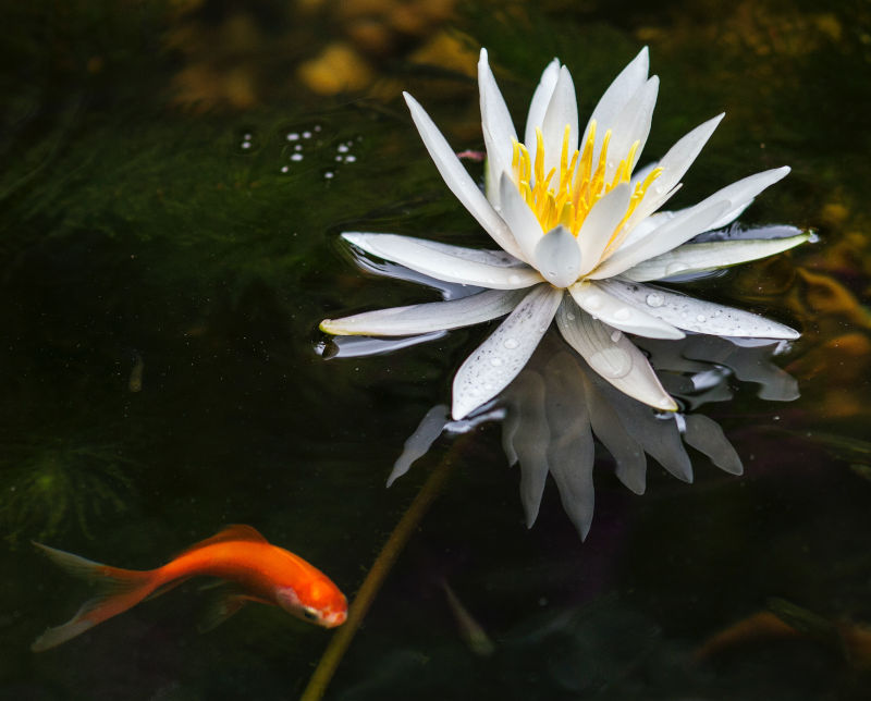 pond in wildlife garden