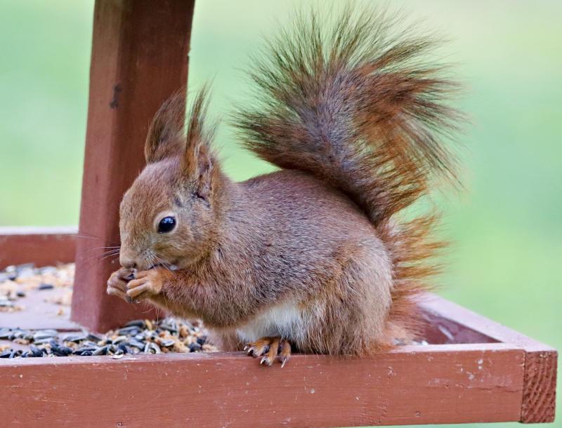 wildlife squirrel food