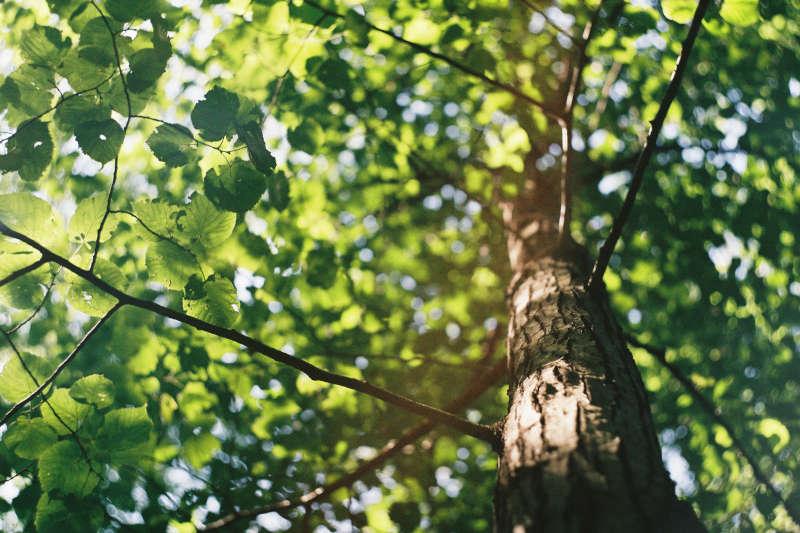 wildlife garden tree