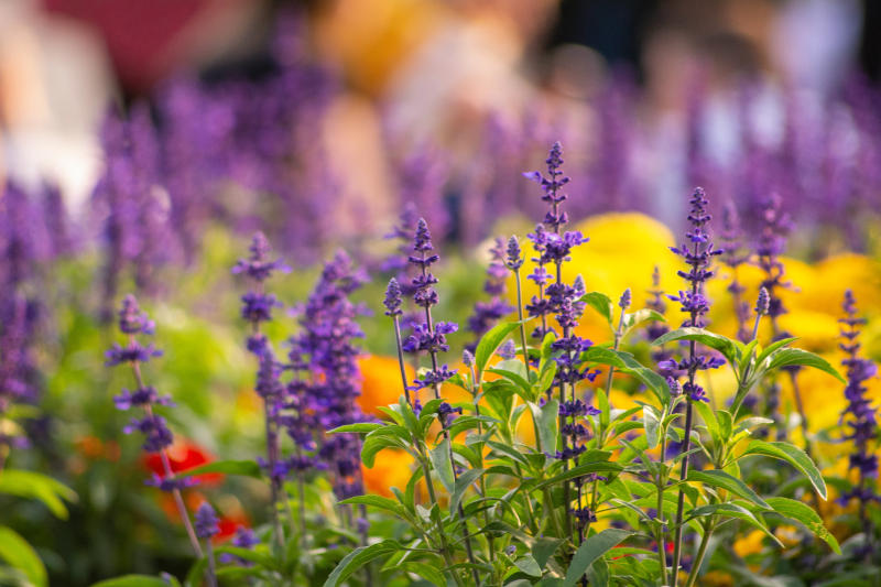wildlife flowers